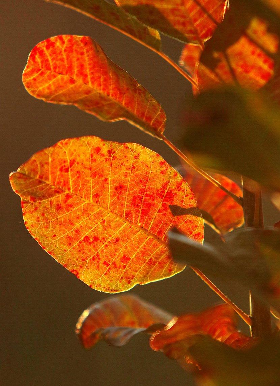 Jesen u Deliblatskoj peščari