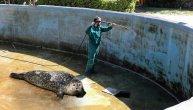 Amerikanci su se zgadili kad su videli kako i gde živi foka u srpskom zoo-vrtu: Otišli smo tamo, pogledajte šta smo zatekli! (VIDEO)