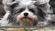 Poslednja želja žene izazvala je mnoštvo negodovanja: Njen pas je ubijen kako bi ga sahranili pored nje