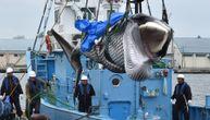 U Japanu ulovljeni prvi kitovi, posle 30 godina zabrane (FOTO) (VIDEO)