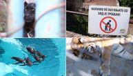 Istine i zablude o zoo-vrtu: Da li je pingvinima vruće, obrušava li se zid, je l' tigar neuhranjen?