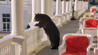 Nije maskota, i nije nimalo pitom: Medved zapanjio osoblje hotela, pa nonšalantno odšetao