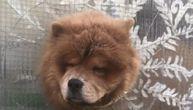 Sladak ili tužan prizor na Zvezdari: Pas gura glavu kroz rupu na terasi da osmotri ulicu (VIDEO)