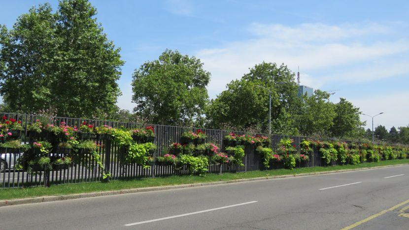 Cveće, Bulevar Mihajla Pupina