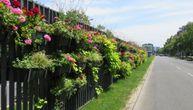 Cvećem obojen Beograd: Cvetnjak na auto-putu dočekuje i ispraća posetioce, sadnice krase ceo grad