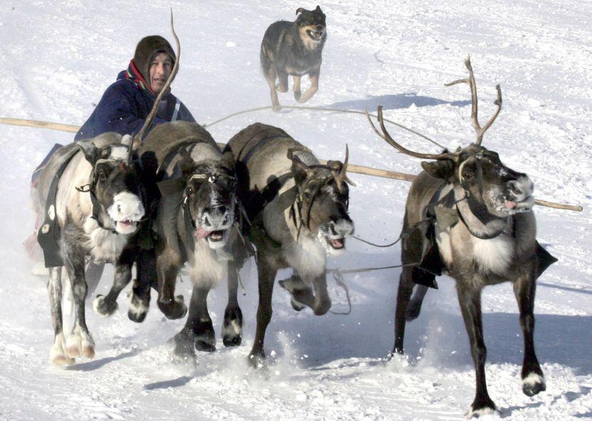 Neneci poznati i kao Samojedi, nomadski narod koji živi u području Jamalo-Nenecki na periferiji Rusije