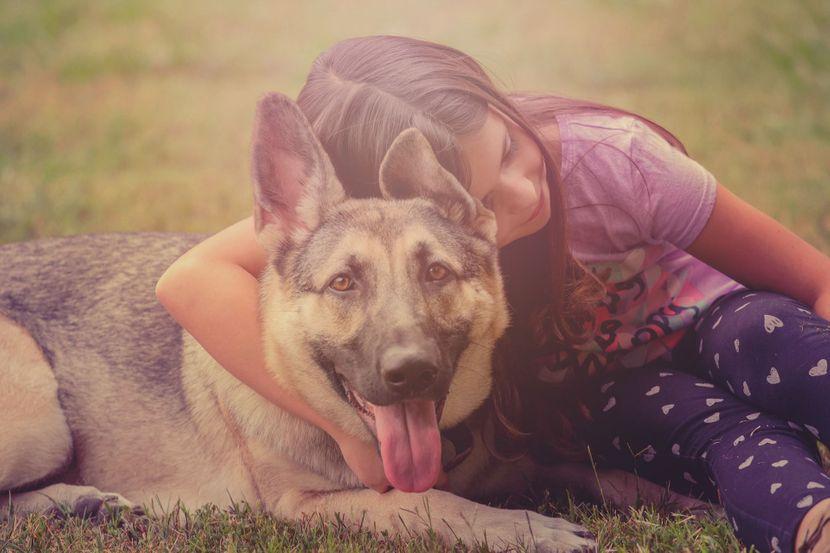 pas vučjak devojčica dete
