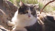 Mačka usred potrage u pesku čula pticu i izbezumila se (VIDEO)