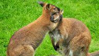 Životinje su, a grle se nežnije nego mnogi ljudi: Slika ljubavi iz BG Zoo vrta je sve raznežila