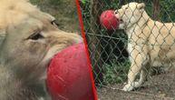 On je Mesi među lavovima, čik probajte da mu oduzmete loptu (VIDEO)