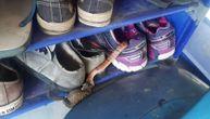 Bitka za cipelarnik! Zmija protiv žabe, protiv žene i smrdljive patike