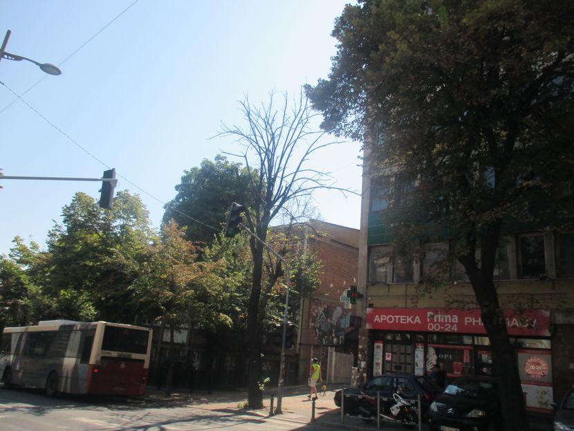 Francuska ulica, Beograd