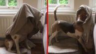 Vi mu ne trebate. Kad mu je hladno, ovaj pas će se sam pokriti (VIDEO)