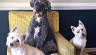 """""""Tri psa su mi uginula nakon plivanja od samo 15 minuta"""": U jezeru pronađene otrovne alge"""