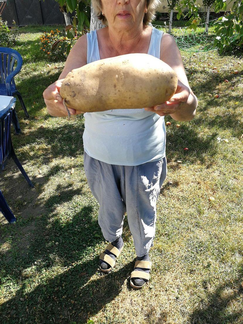 Džinovski krompir, Nataša Inđić