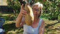 "Nataša u bašti izvadila krompir od 1,5 kilograma: ""Od njega ću napraviti pomfrit"""