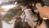 Krenula da pomazi krabu, pa vrisnula od bolova (VIDEO)