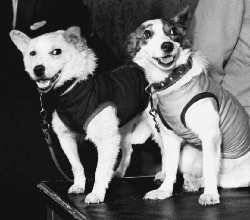 Belka i Strelka, sovjetski svemirski psi