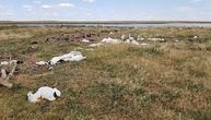 S neba palo 11.000 mrtvih ptica: Meštani se prestrašili, ali ubrzo je stiglo objašnjenje (FOTO)