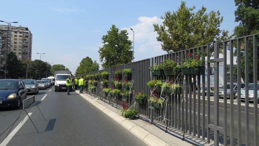 Gradsko zelenilo, cveće, Bulevar Živojina Mišića