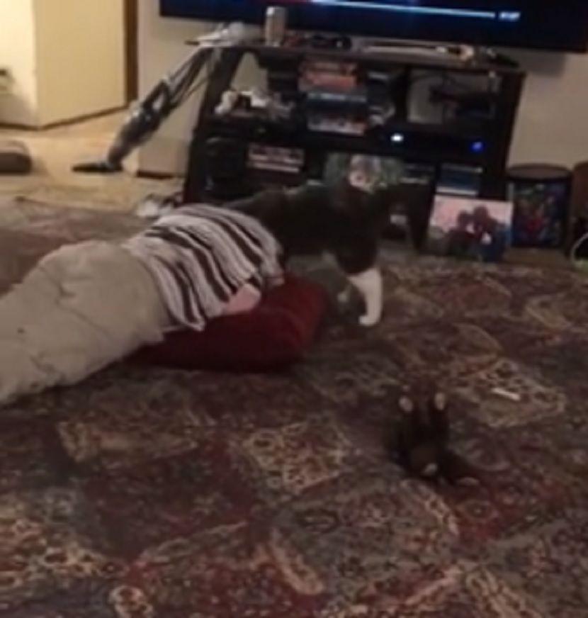 dečak, mačka