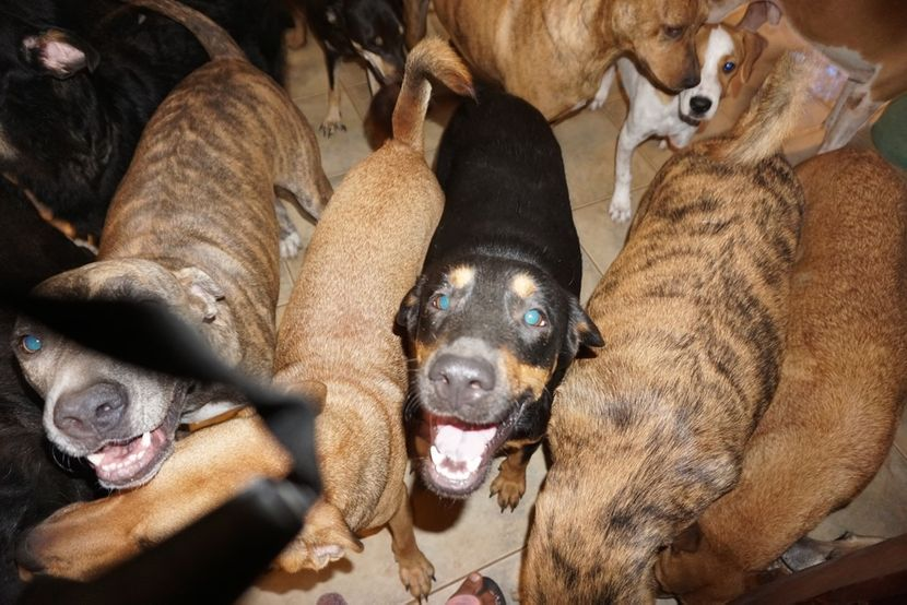 The Voiceless Dogs of Nassau