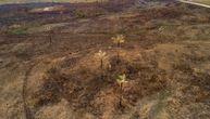 Čudo u Amazoniji: Ogromni požari zaobišli najviše stablo