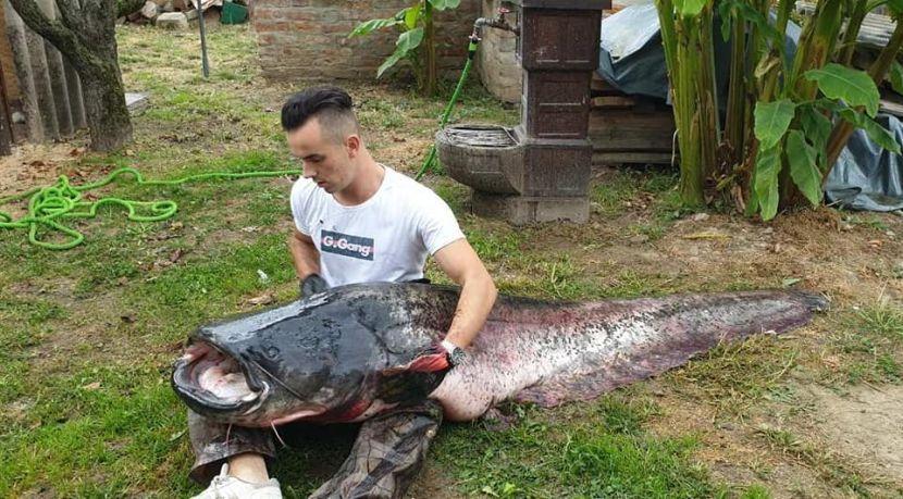 Ogromna riba, Slavonski brod