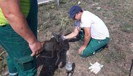 """Radnici novosadskog """"Zelenila"""" našli preplašenu, ranjenu srnu na Bulevaru Evrope (FOTO)"""