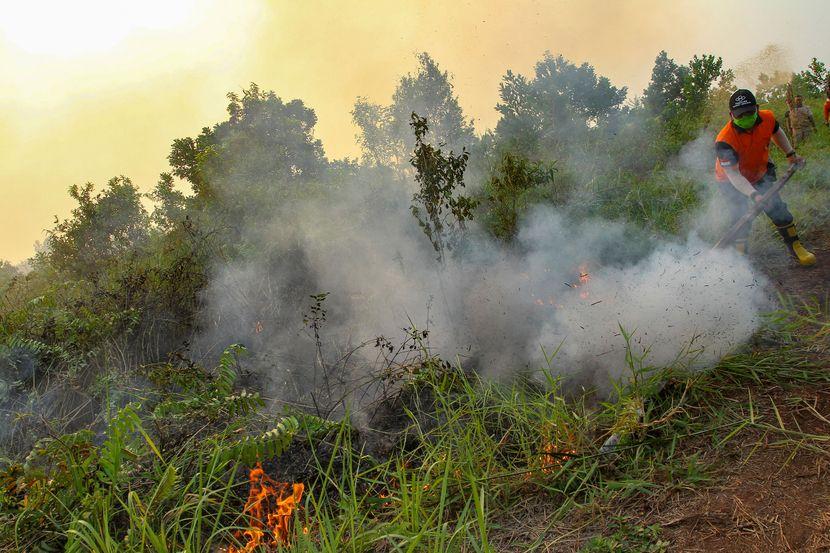 Indonezija šumski požar