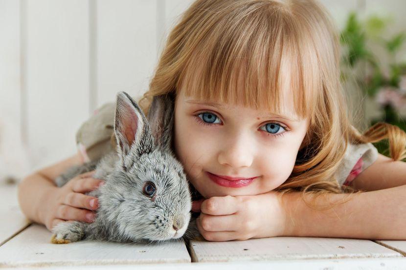 deca i životinje dete životinja zec mačka