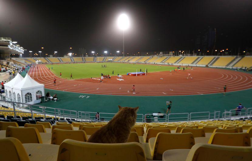 Svetsko prvenstvo u atletici, mačka, tribine, stadion, Doha 2019