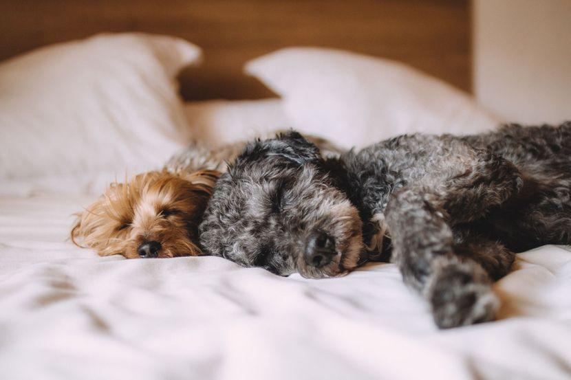 pas u krevetu