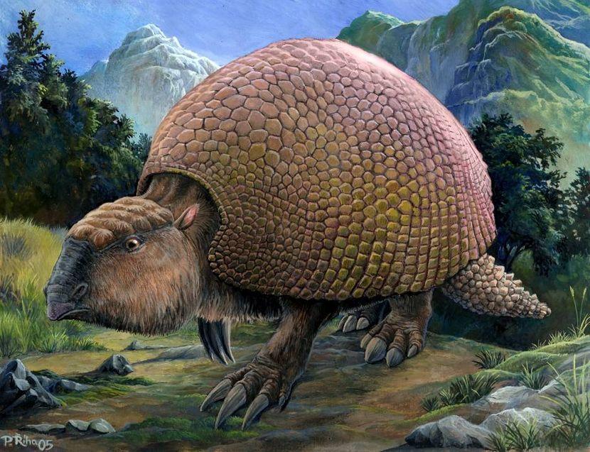 Gliptodon iz Argentine