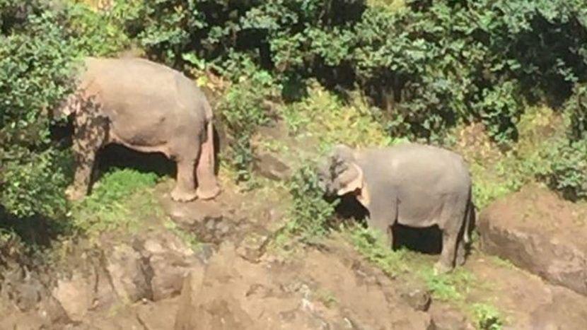 Poginuli slonovi