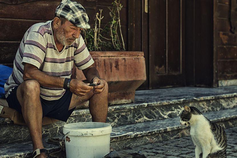 mačke Istanbul