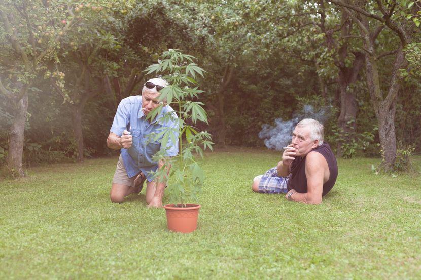 Marihuana, kanabis, stariji muškarac, deda, droga