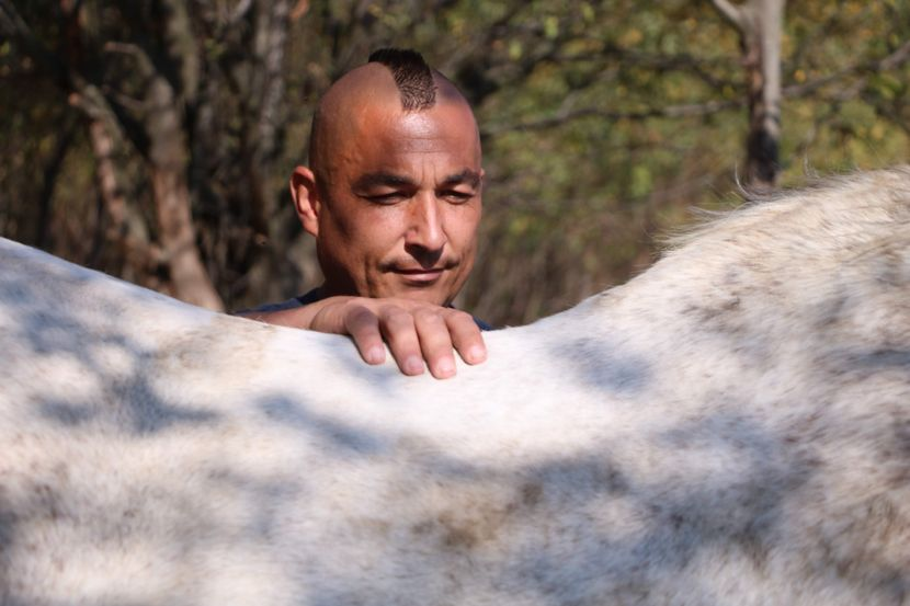 Azil za konje u Lapovu