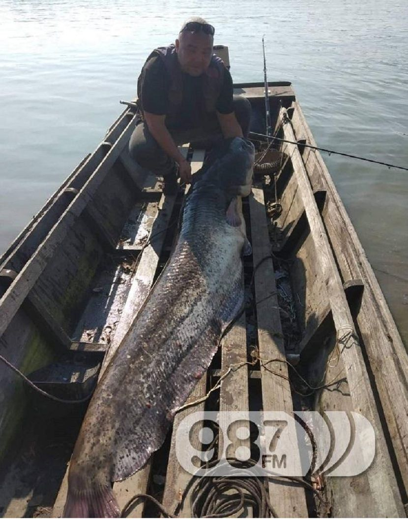 Vid Vico Bašić, ribolovac, som kapitalac