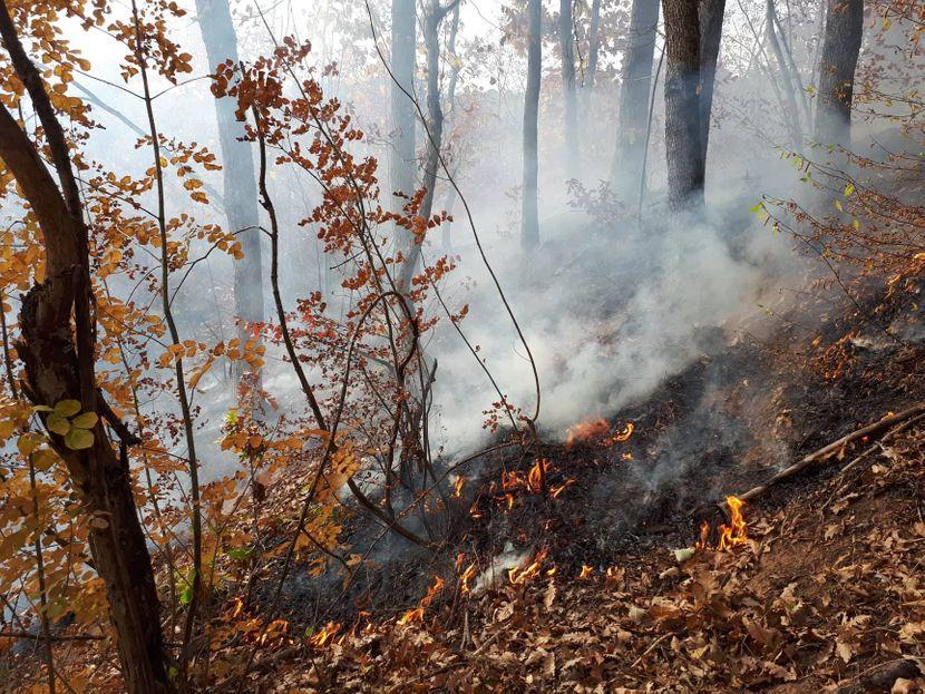 Požar, šuma, Gadžin Han