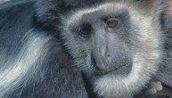 Sa lica zemlje za 50 godina nestalo više od 50 odsto životinja: Na udaru amazonske šume