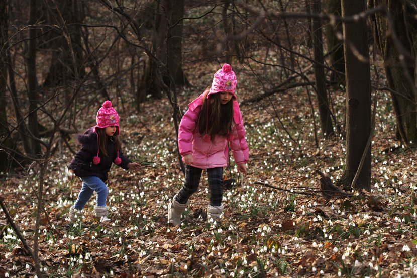 Procvetale visibabe na Fruškoj gori.