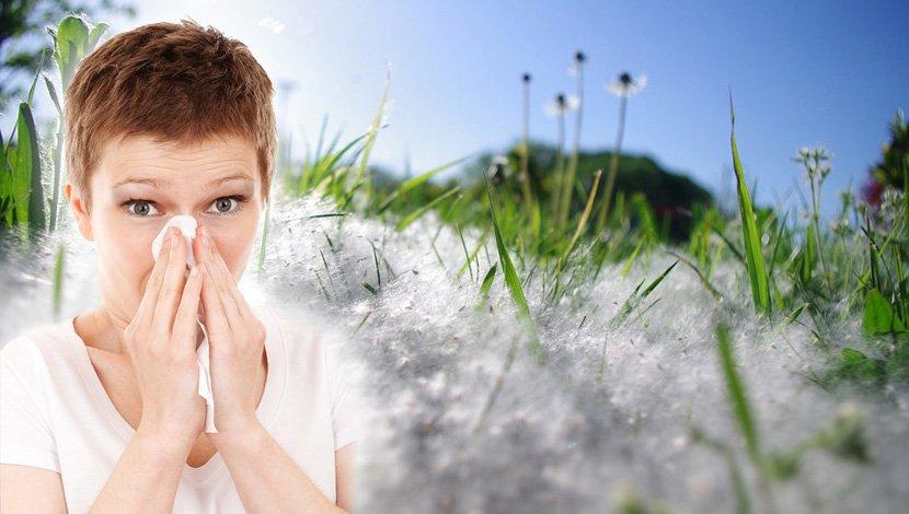 allergy, Ambrozija, alergija, polen, kijavica