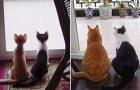 Prijatelji među životinjama, nekad i sad