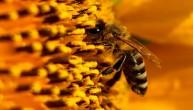 NEVEROVATNA PRIRODA: Pčele prave med pred vašim očima