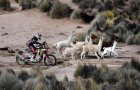 Trke tokom 7. etape Dakar relija između La Paza i Uiunija u Boliviji.