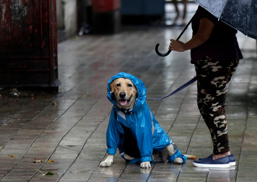 Pas, kabanica, kiša, ulica, čovek, kišobran, vreme